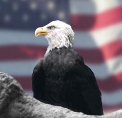 Leaderpromos-Eagle-USA