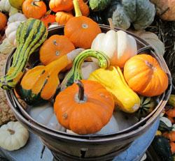 Thanksgiving-Pumpkins
